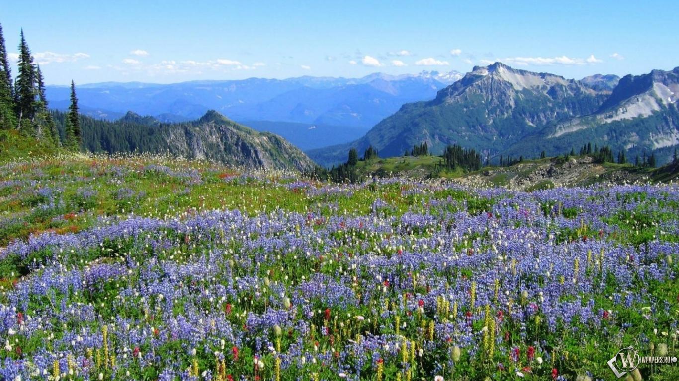 Горы деревья цветы 1366x768 картинки
