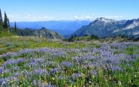 Обои Альпийские луга: Горы, Деревья, Цветы, Прочие пейзажи