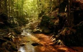 Обои Речка в лесу: Лес, Природа, Солнце, Речка, Чаща, Прочие пейзажи
