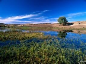 Обои Природа: Дерево, Трава, Небо, Прочие пейзажи