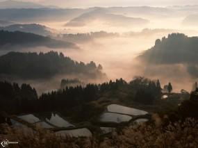 Обои Рисовая плантация: , Прочие пейзажи