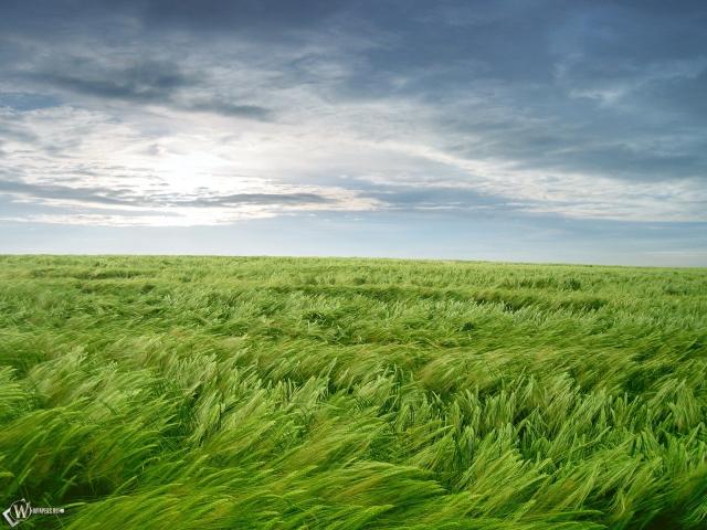 Ветер на поле