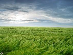 Обои Ветер на поле: , Прочие пейзажи