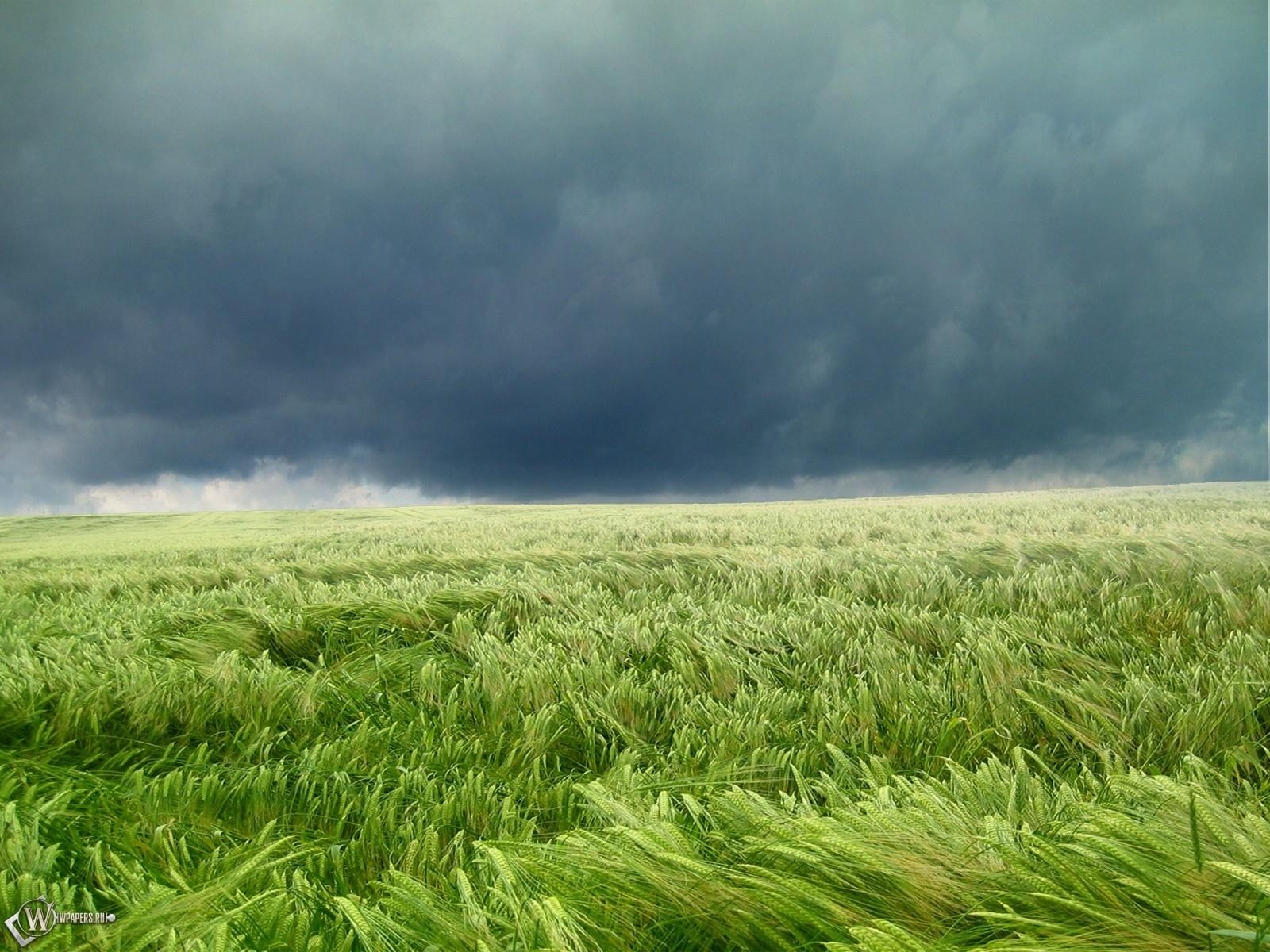 Ураган на поле 1600x1200
