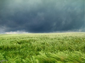 Обои Ураган на поле: , Прочие пейзажи