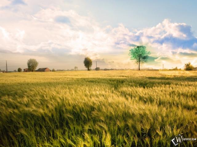 Скачать обои Безмятежное поле (Поля, Злаки, Пшеница, Ветер