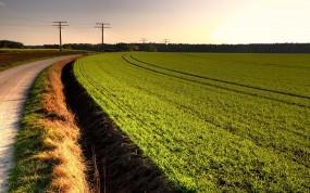 Обои Дорога в поле: Дорога, Поле, Небо, Прочие пейзажи