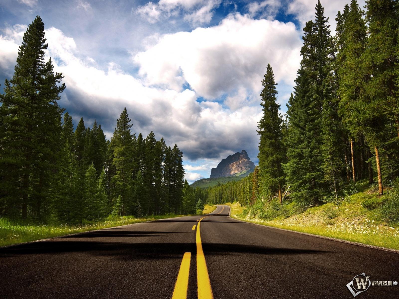 Дорога лес деревья 1600x1200 картинки
