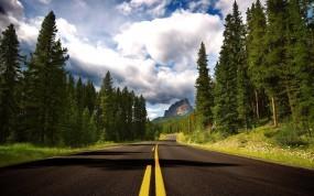 Обои Дорога: Разметка, Дорога, Лес, Деревья, Прочие пейзажи
