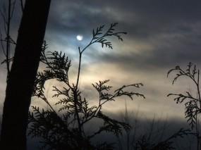 Обои Луна за ветками: Облака, Туман, Луна, Ветки, Прочие пейзажи