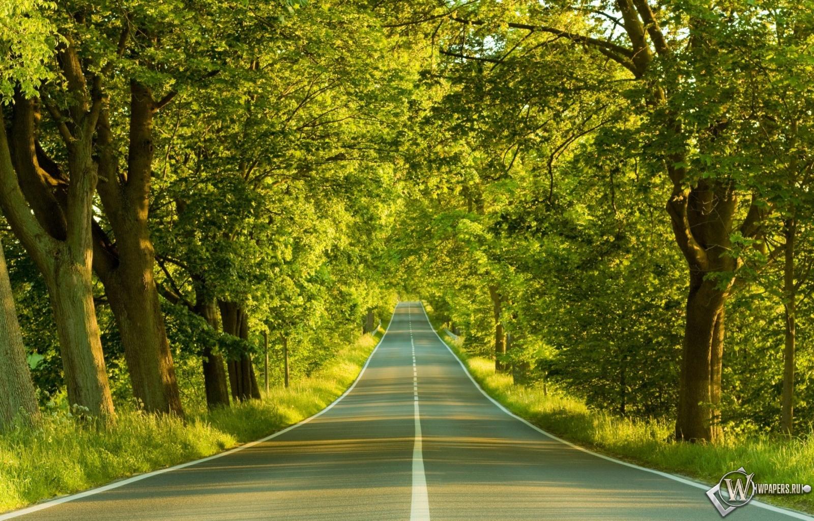 Обои дорога в лесу на рабочий стол с