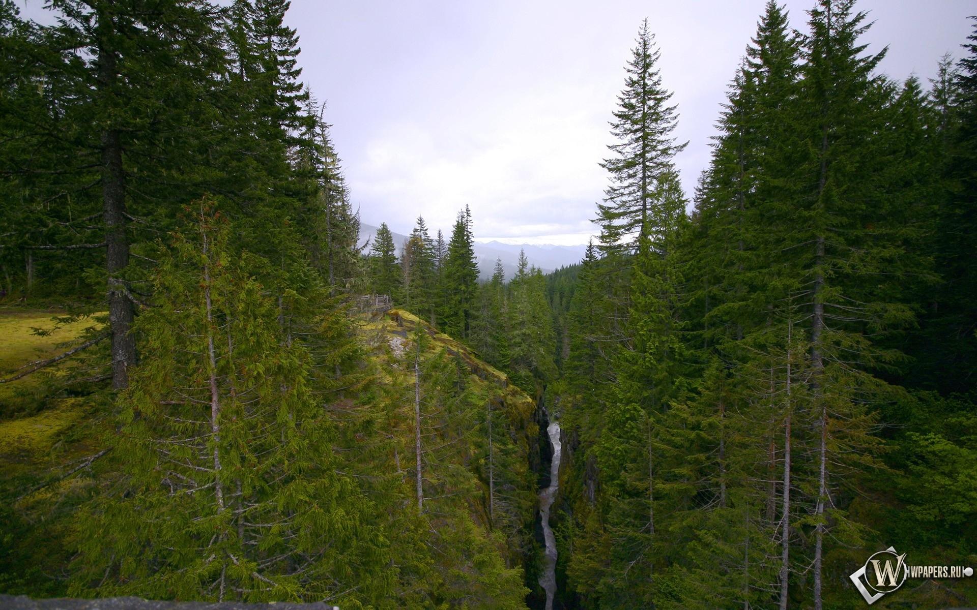 Горный лес 1920x1200