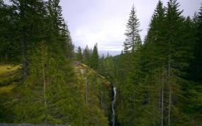 Обои Горный лес: Горы, Лес, Деревья, Речка, Прочие пейзажи