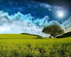 Обои Небо над полем: Облака, Поле, Звёзды, Дерево, Прочие пейзажи