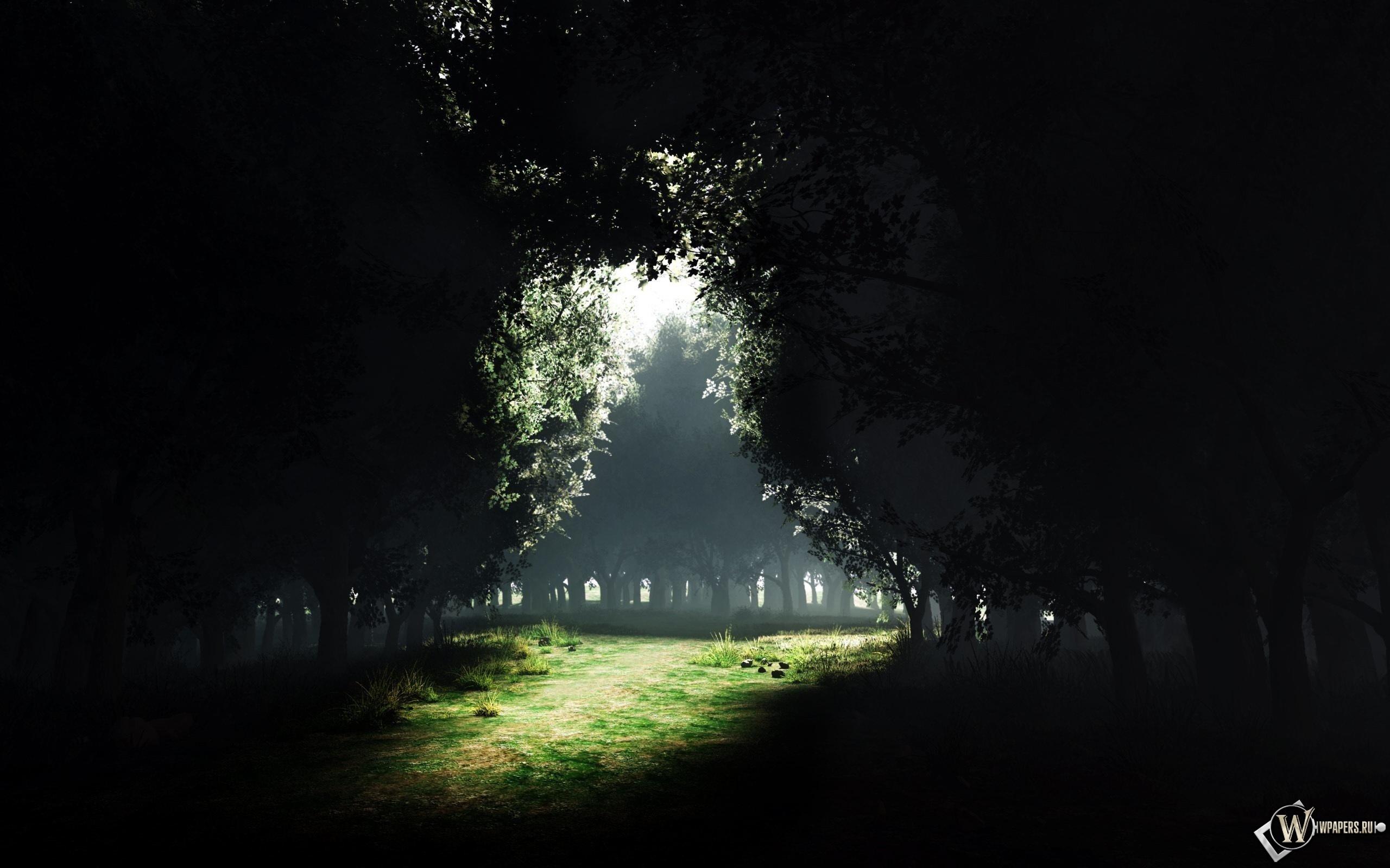 Поляна в густом лесу 2560x1600