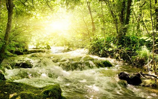Бурная речка в лесу