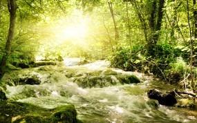 Обои Бурная речка в лесу: Свет, Зелень, Лес, Солнце, Речка, Прочие пейзажи