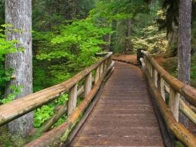Обои Мостик в лесу: Лес, Деревья, Мост, Тропа, Прочие пейзажи