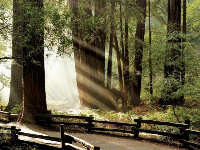Лучики в лесу