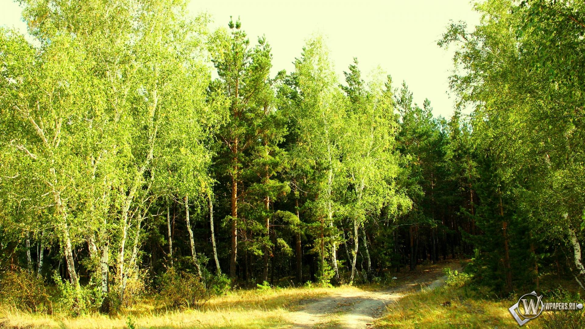 Картинки для рабочего стола лето река лес