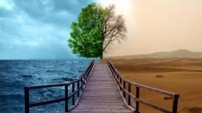 Обои Разный климат: Пустыня, Море, Дерево, Климат, Прочие пейзажи