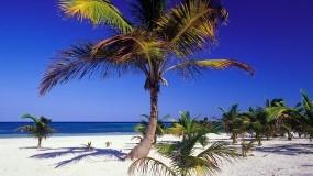 Обои Пальмы: Пальмы, Море, Небо, Relax, Прочие пейзажи