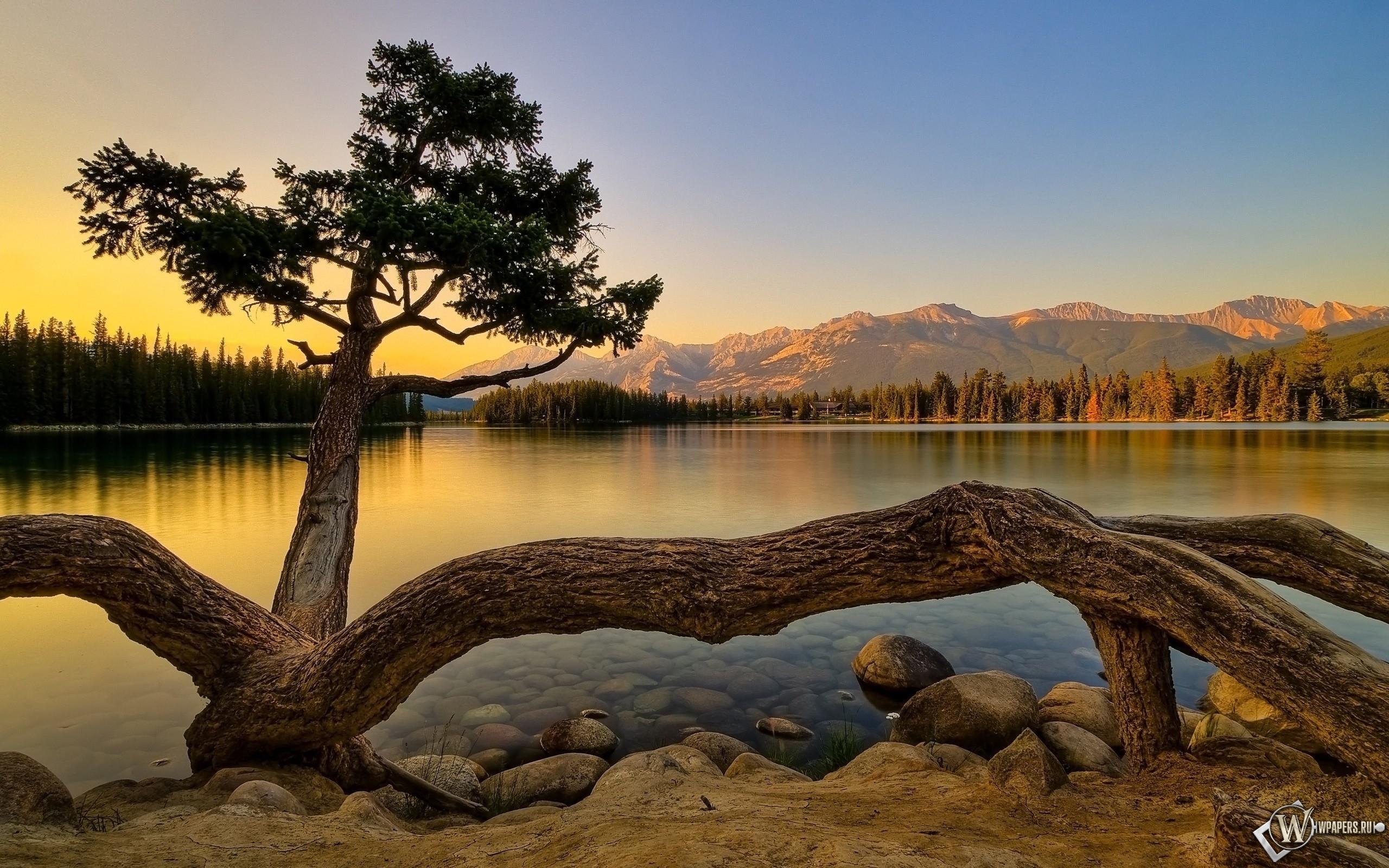 Живучее дерево 2560x1600
