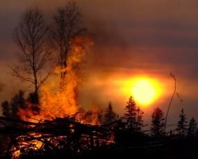 Обои Лесные пожары: Солнце, Дерево, Пожар, Прочие пейзажи