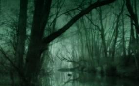 Обои Зеленое болото: Зелень, Лес, Болото, Зеленое, Прочие пейзажи