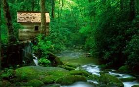 Обои Лесной домик: Вода, Лес, Туман, Зелёный, Хижина, Домик, Прочие пейзажи