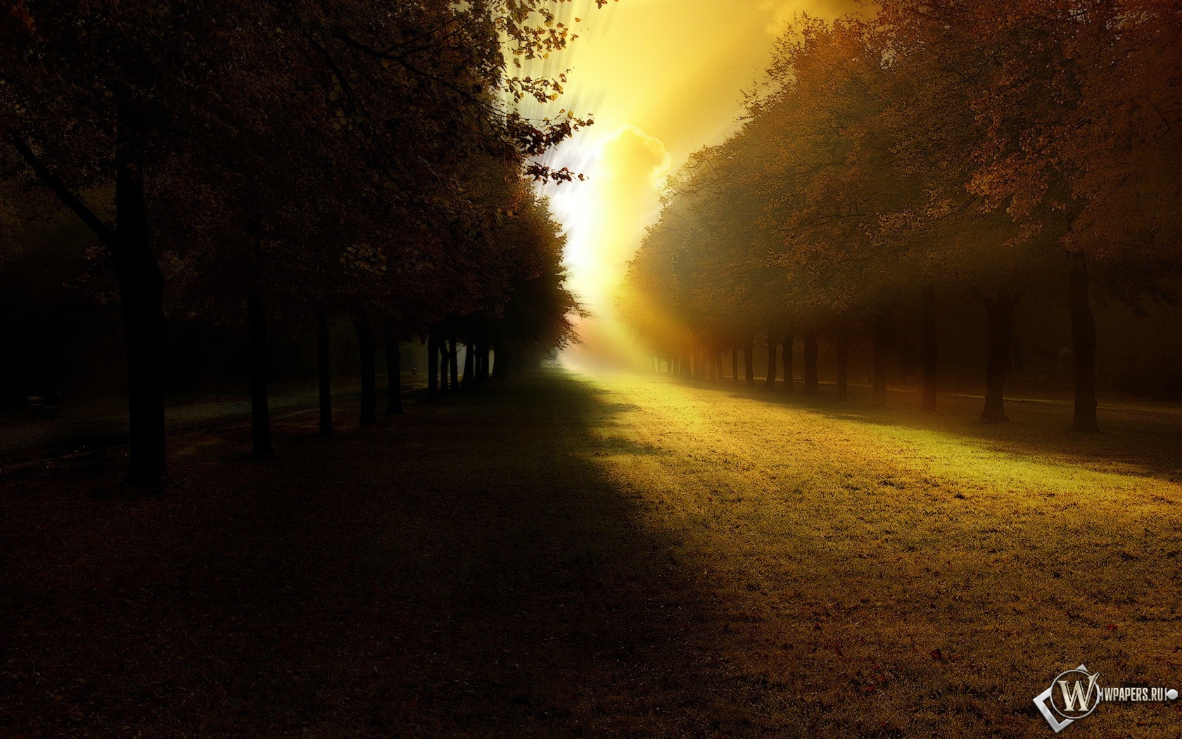 Свет в парке 1680x1050