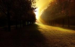 Обои Свет в парке: Свет, Деревья, Тень, Парк, Прочие пейзажи