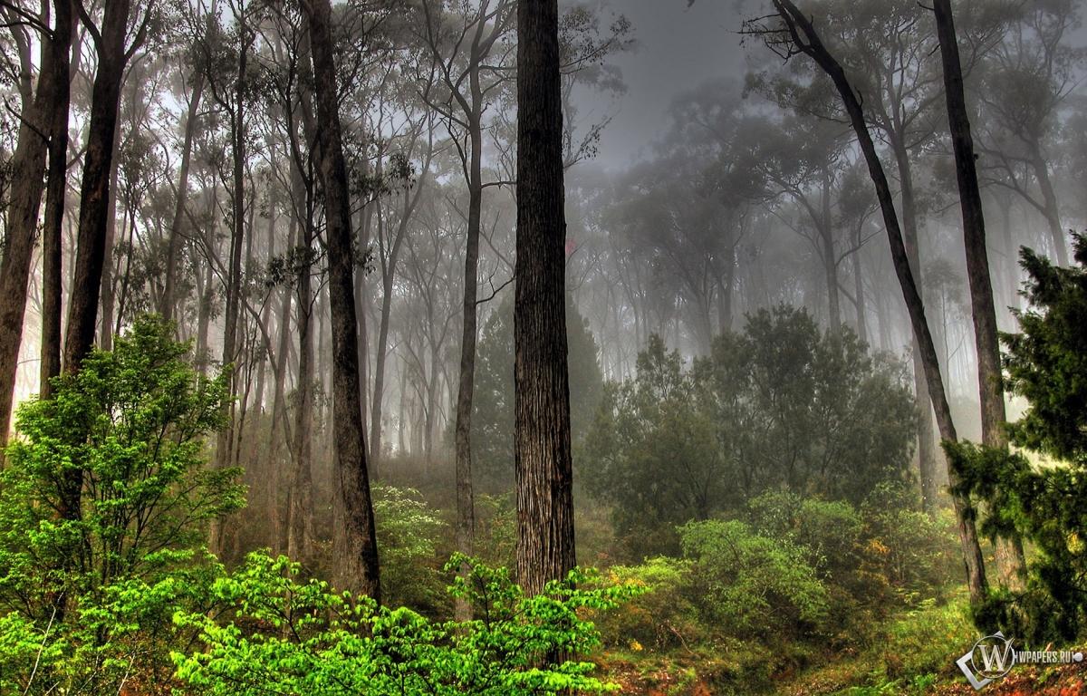 Пейзаж лес деревья небо пейзаж