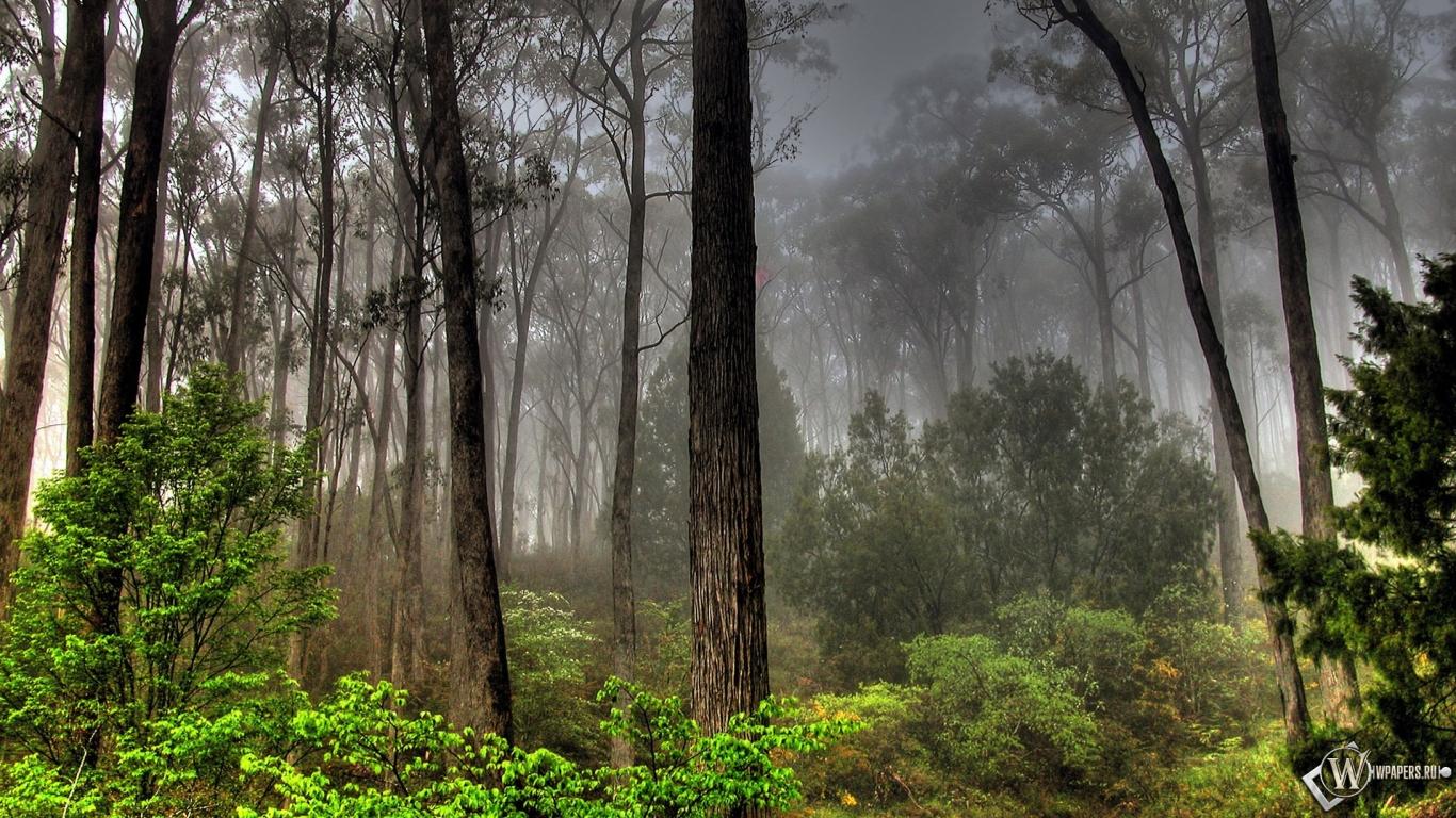 Обои лесной пейзаж лес деревья небо