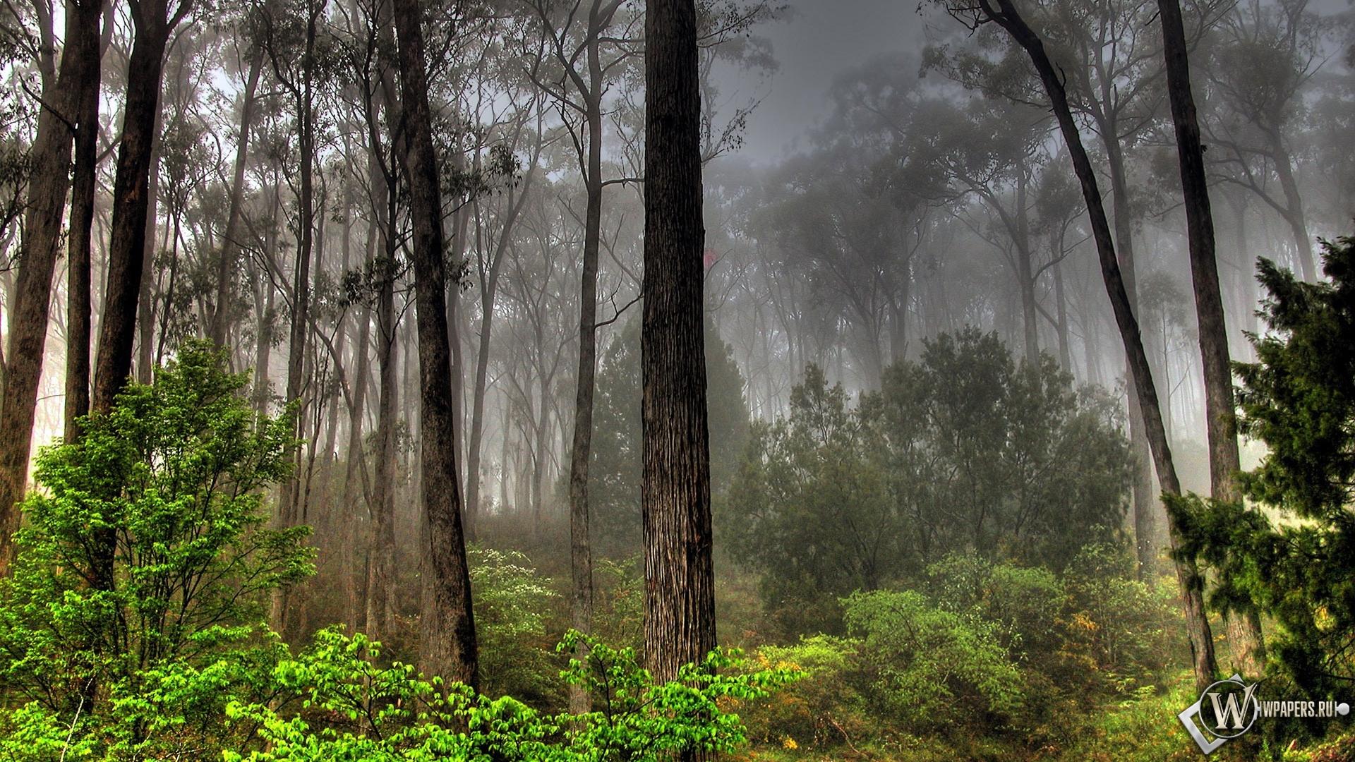 Лесной пейзаж 1920x1080