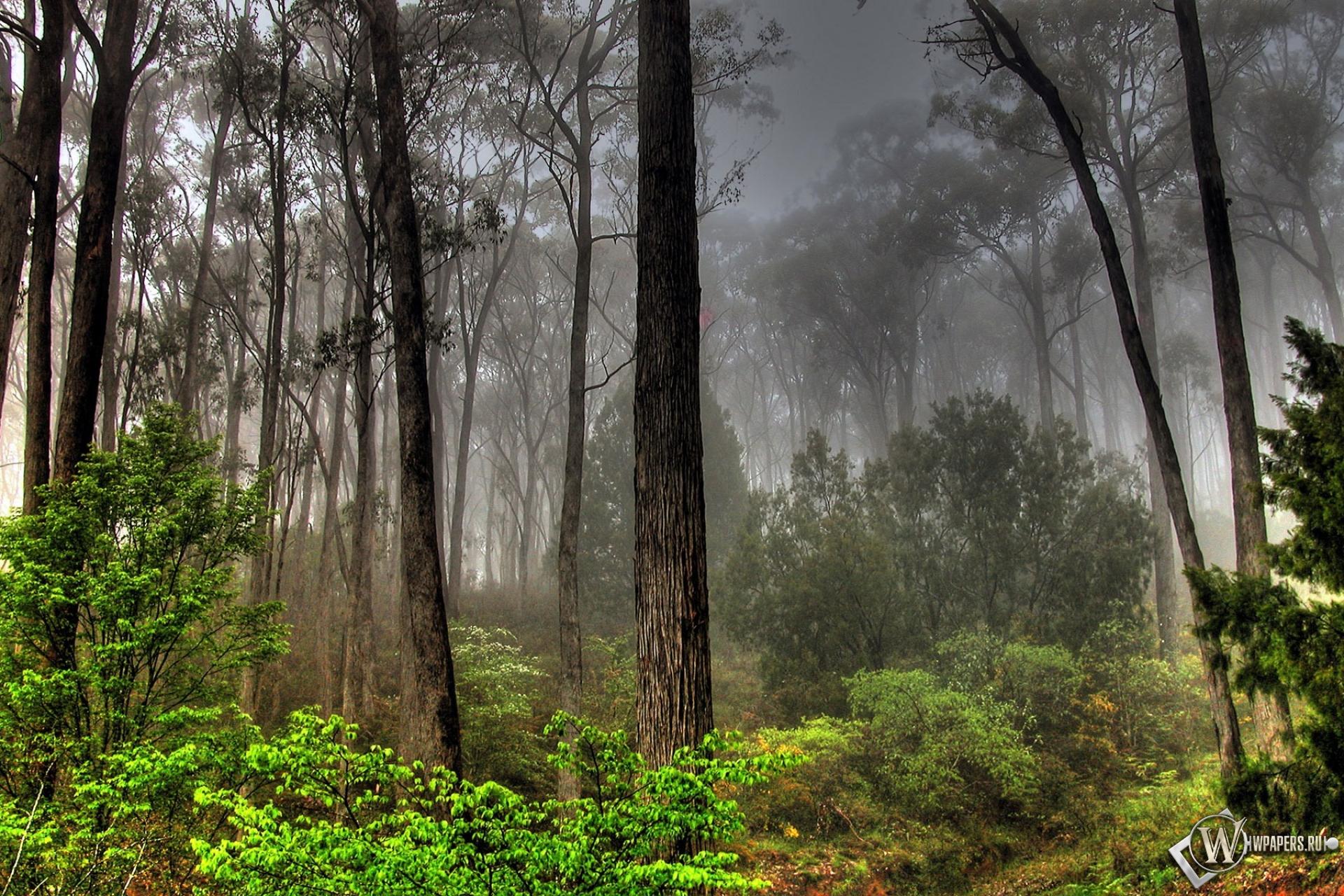 Лесной пейзаж 1920x1280