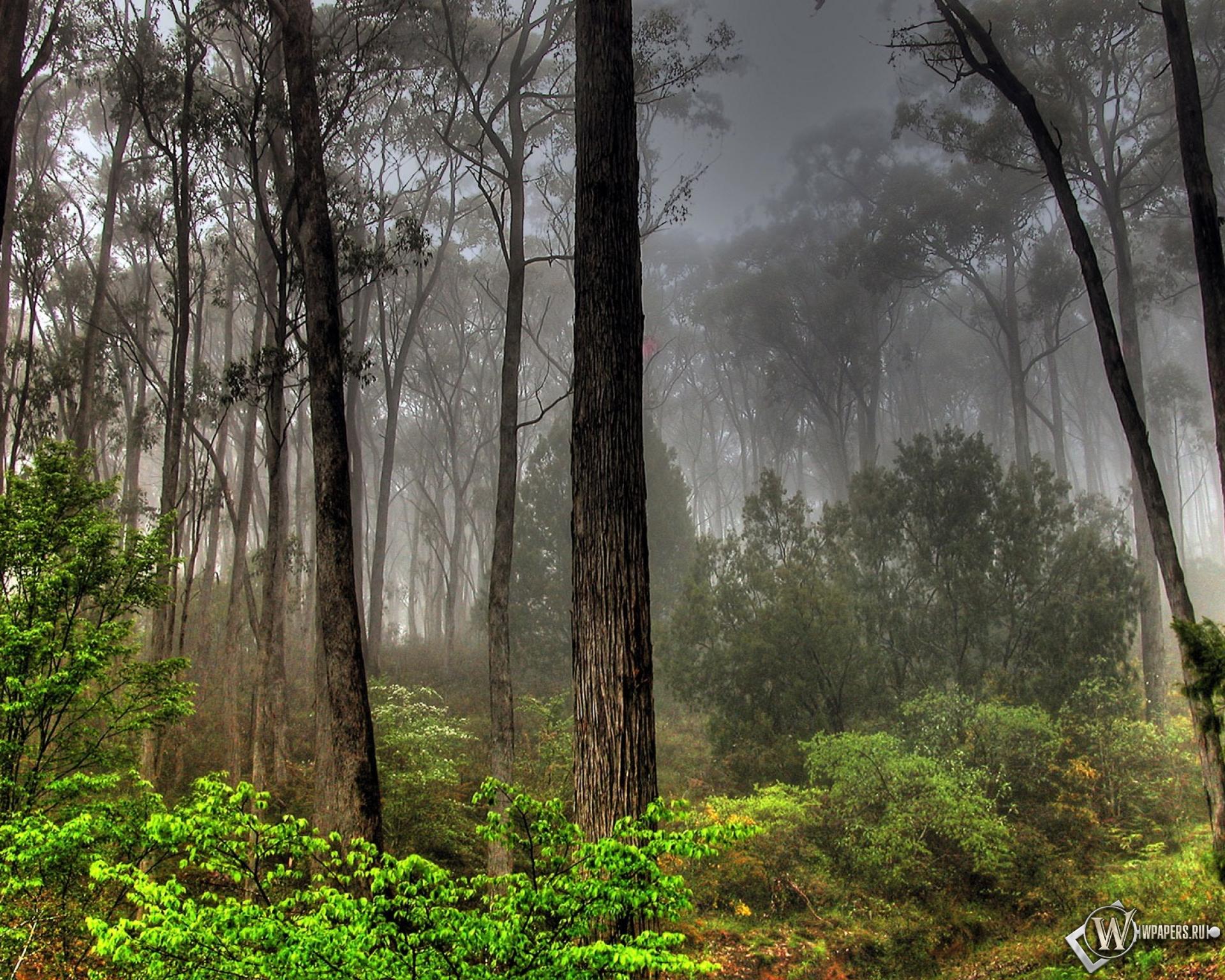 обои на рабочий стол лес в тумане hd № 251995 бесплатно