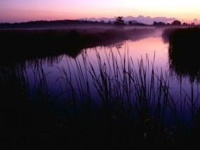 Обои Болото утром: Трава, Утро, Болото, Прочие пейзажи