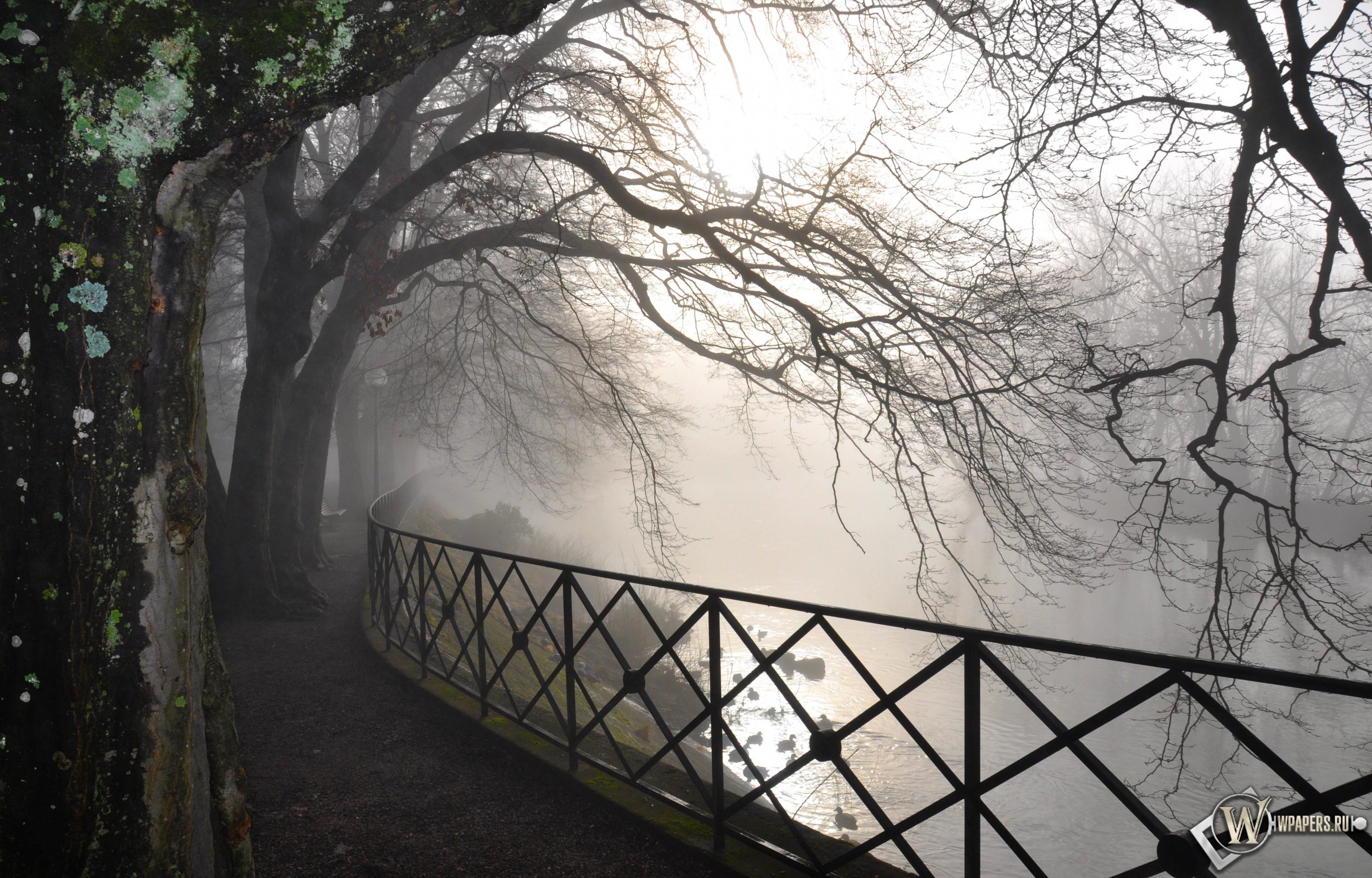 Туман в парке 3200x2048
