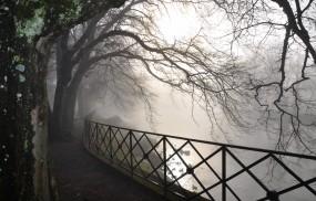 Обои Туман в парке: Река, Деревья, Туман, Ветви, Прочие пейзажи