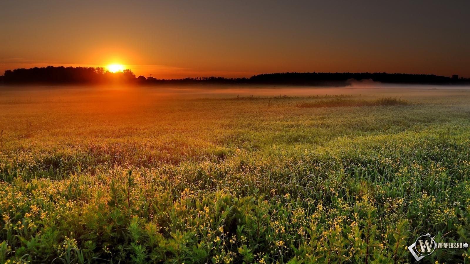 Обои утро природа солнце туман поле