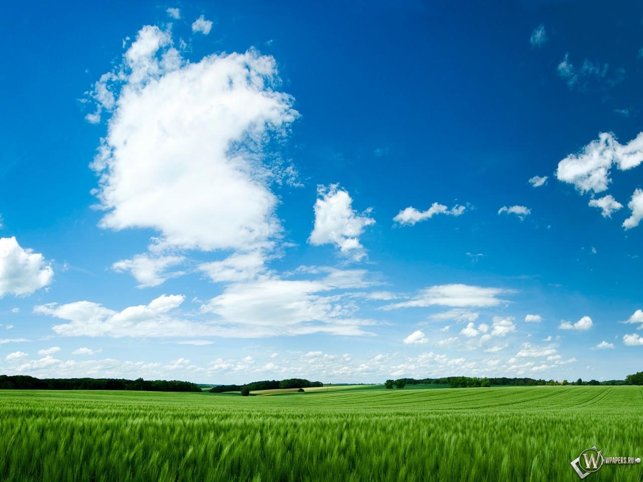 Зелёное поле 1280x960