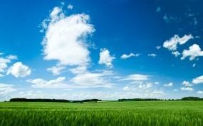 Обои Зелёное поле: Поле, Небо, Зелёный, Лето, Прочие пейзажи