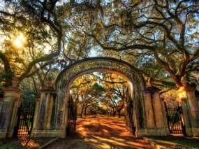 Обои Ворота в парк: Деревья, Солнце, Парк, Аллея, Ворота, Вход, Прочие пейзажи