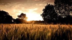 Обои Восход в поле: Восход, Поле, Прочие пейзажи