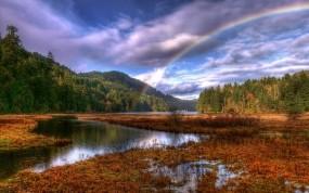 Обои Радуга влесу: Облака, Лес, Радуга, Прочие пейзажи