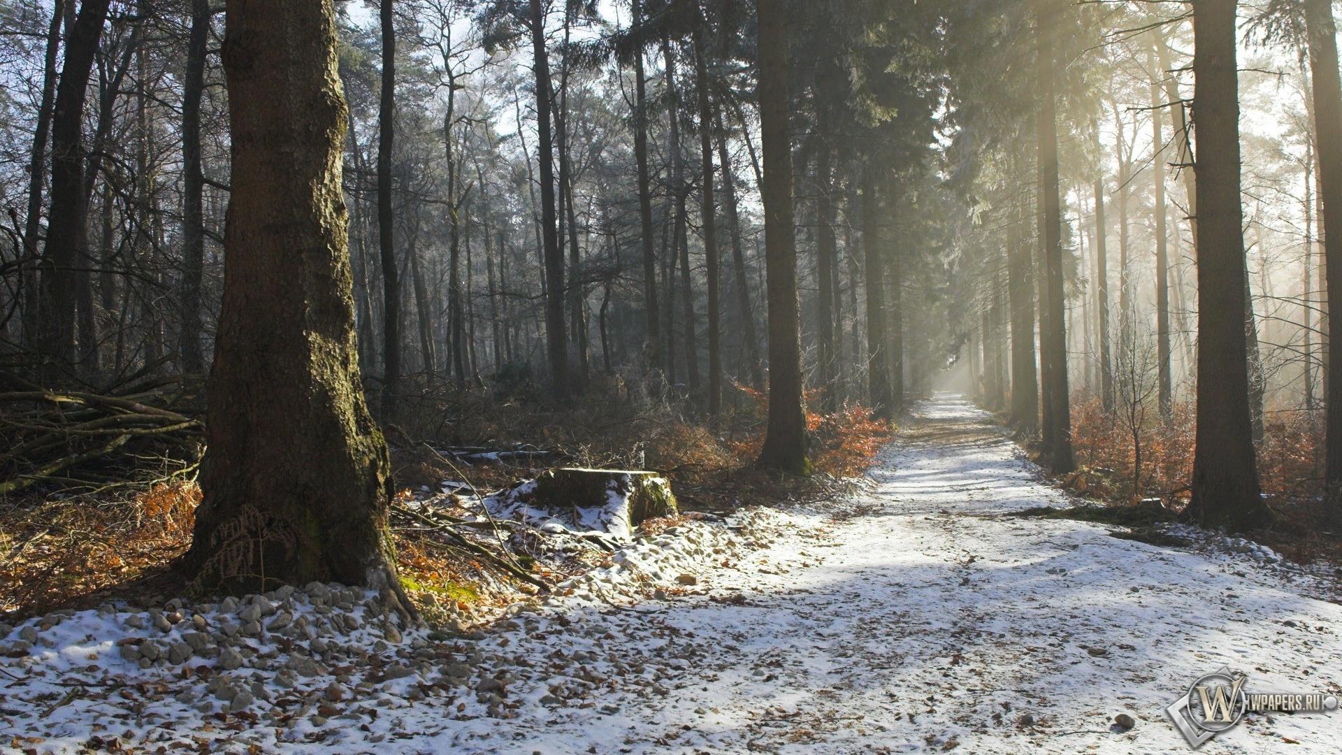 Природа красота осень утро 1920x1080
