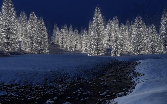 Светящийся лес