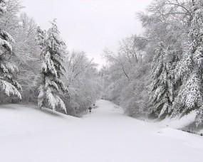 Обои Зимняя дорога: Зима, Снег, Дорога, Деревья, Природа