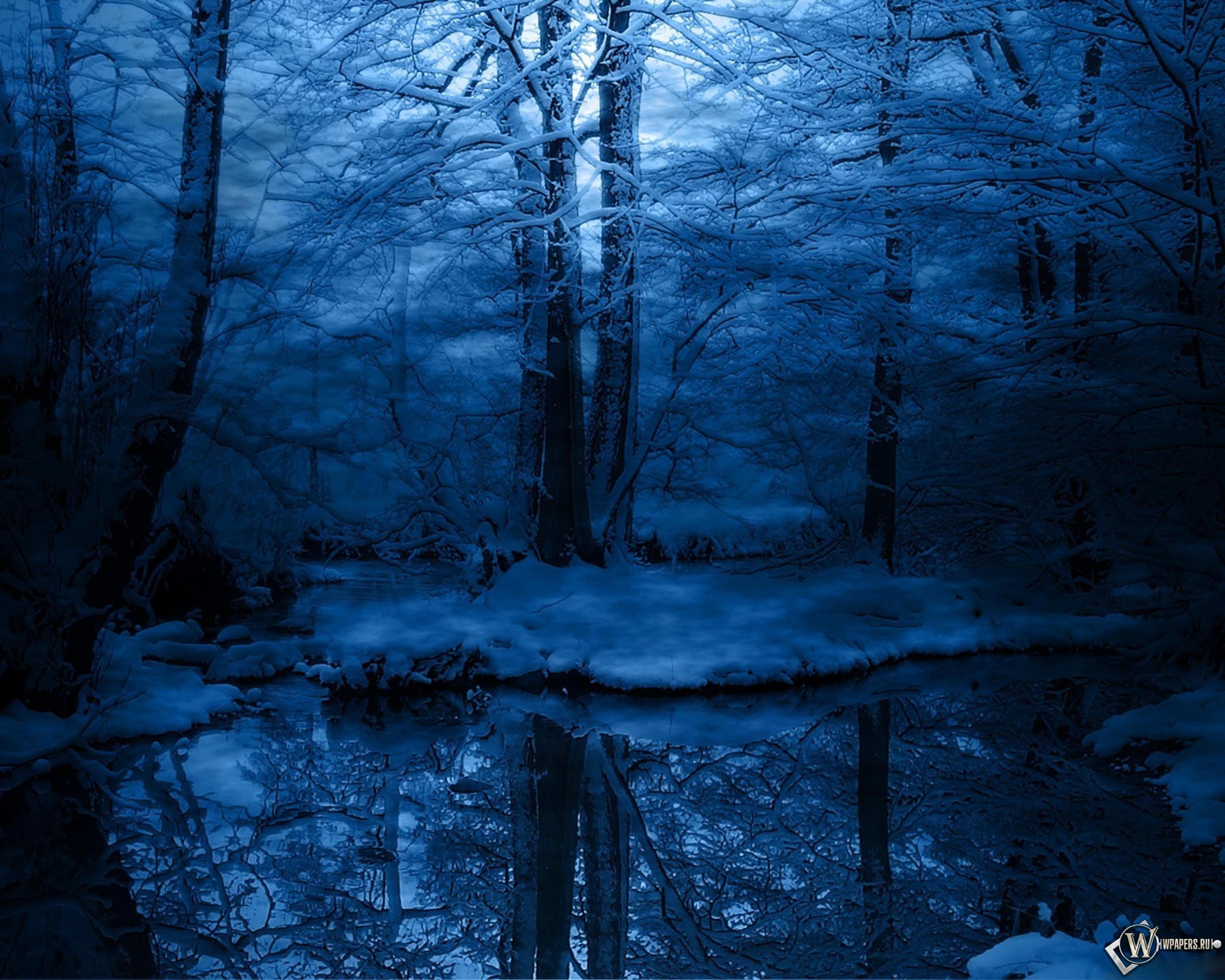 Зимняя ночь в лесу 2560x2048
